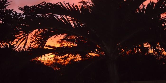 Zonsondergang tuin