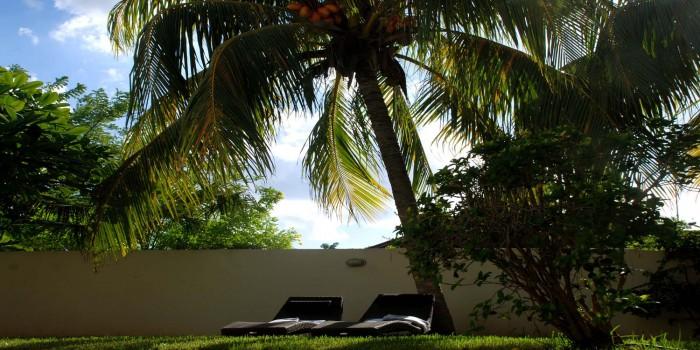 Zonnebedjes onder de palmen